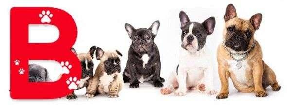 Nombres para Perros Machos que Empiezan por B