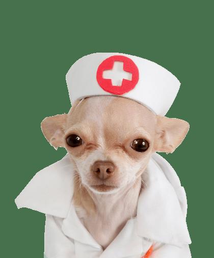perro-enfermero