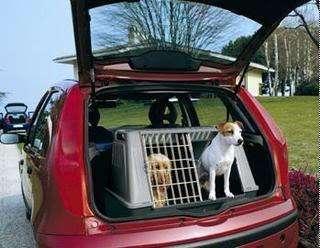 Consejos para Viajar con tu Perro en Coche