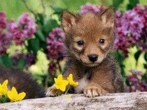 La Primavera y los Cachorros