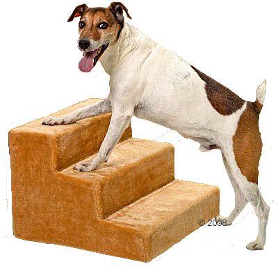 Mega Es Fago En Perros Articulos De Perros