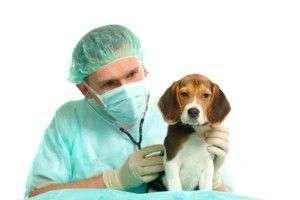 hernias umbilicales perros