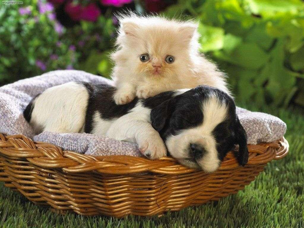 Cachorros de Perro y Gato