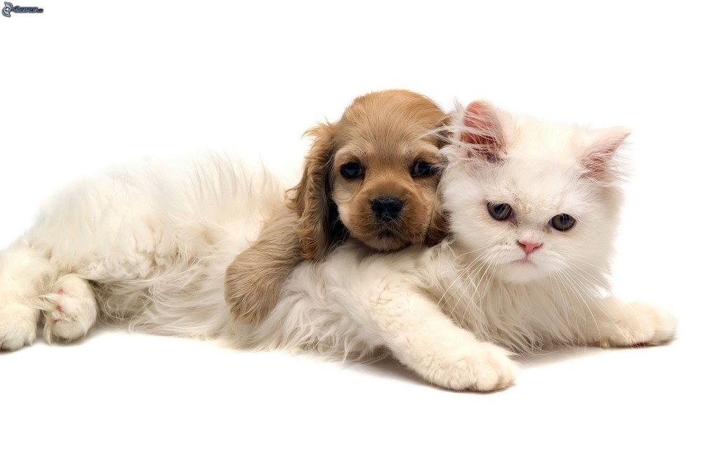 Fotografia Perro y Gato