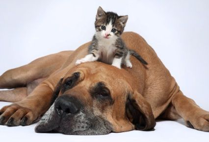 perro y gatito