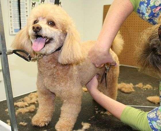cortar pelo perro verano