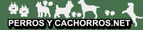 Adiestrar Perros - Razas de Perros - Fotos de Cachorros