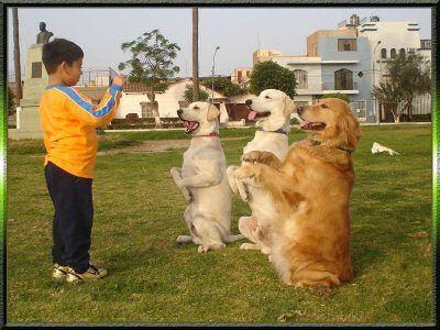 jornada-educacion-perros