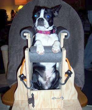 taburetes o sillas para perros con megaesofago