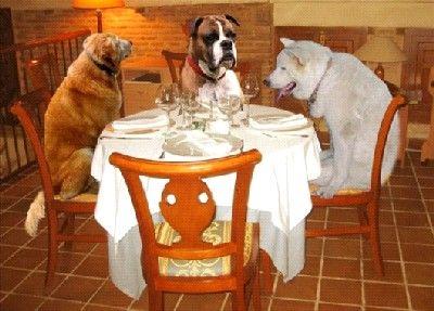 cafeteria-perros