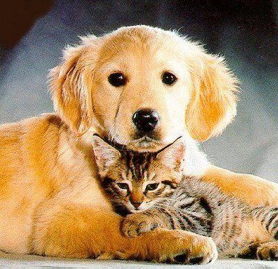 Los Perros y Gatos pueden llevarse bien