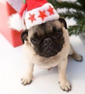 Regalar un perro por Navidad