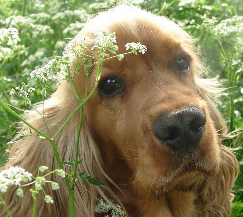 El Mundo De Los Perros Articulos De Perros