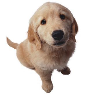 perro bueno