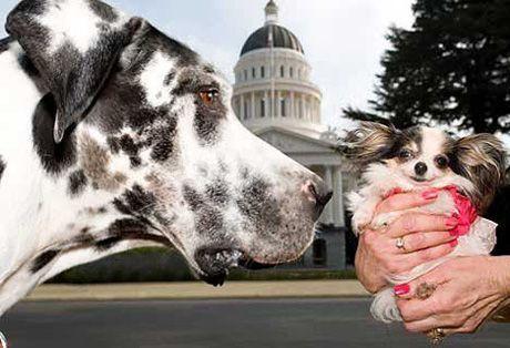 Gibson, el perro más grande del mundo 3