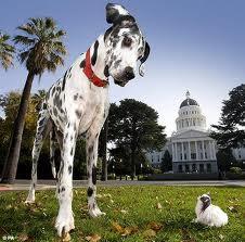 Gibson, el perro más grande del mundo