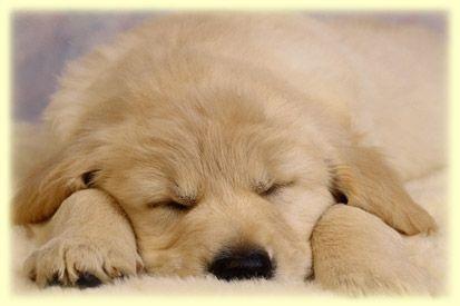 cachorro_duermiendo