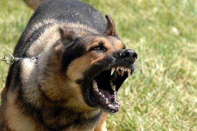 perro-ladrando