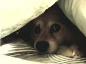 perro-truenos