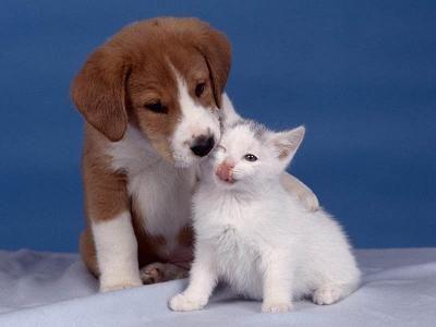 convivencia-perros-gatos