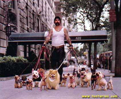 Convivir con varios perros