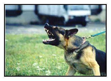 perro-agresivo-conducta