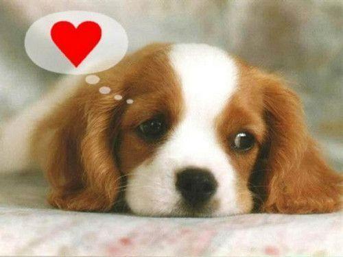 El perro también es el mejor amigo del corazón