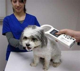 microchip en perros