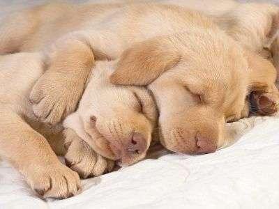 Perros Abandonados Articulos De Perros