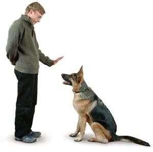 perro adiestrado