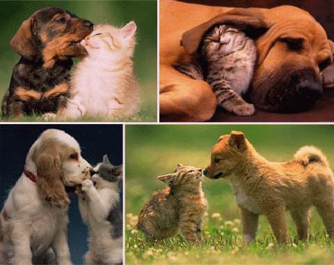 perros_gatos1