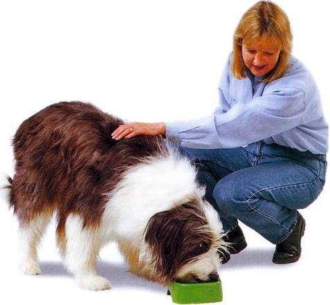 cuidados-para-mascotas1
