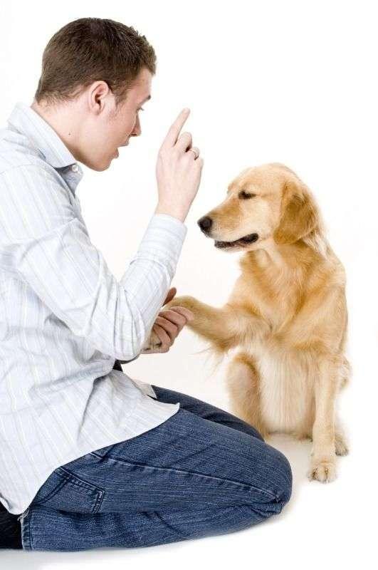 entrenando_perro2