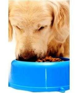 Las proteínas en piensos para perros