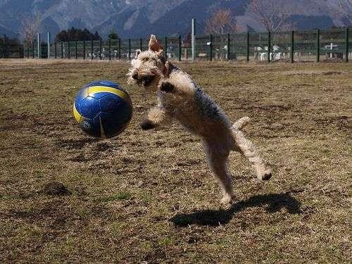 futbol-para-perros