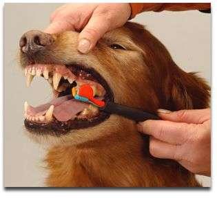 Cepillando-los-dientes-de-su-perrito1