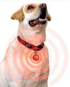 collar-para-perros-con-luz