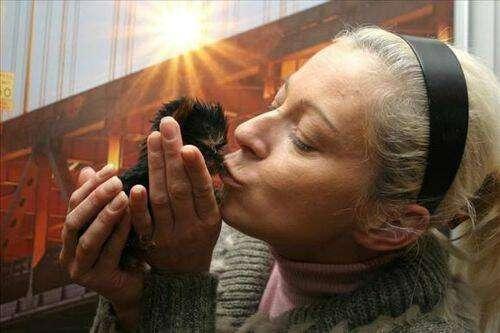 perro mas pequeño del mundo 6