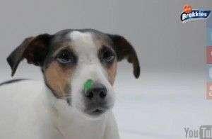 Adopta o Regala un Perro sin Hogar estas Navidades