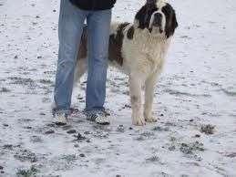 con mi perro en la nieve
