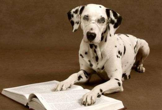 la inteligencia de los perros