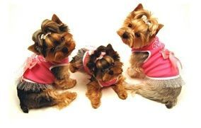 Comprar Online Productos para Perros