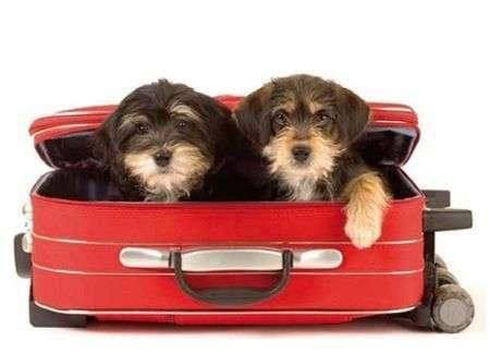 mascotas y viajes