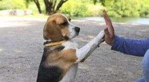 trucos_perro