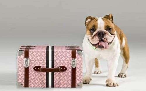 viaje-mascota