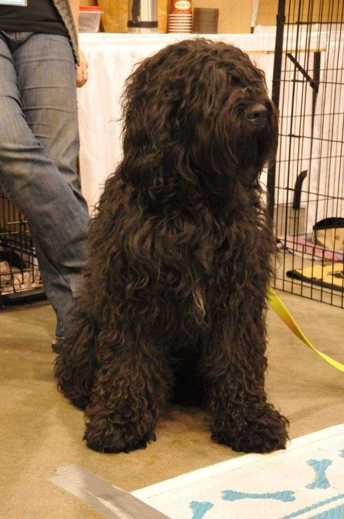 Barbet-Disco-at-the-All-About-Pets-Show
