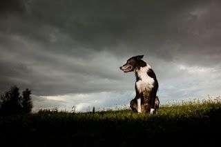 Perro_en_tormenta