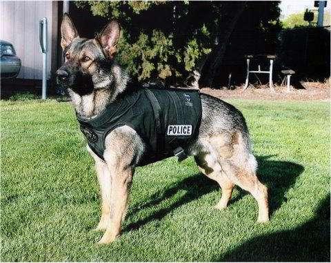 Perros Guardianes para Cuidar la Casa o de Personas
