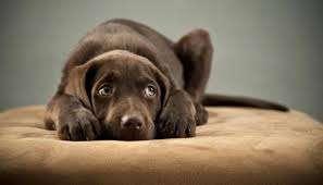 Lenguaje de perros