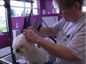 La importancia del corte de pelo para el perro